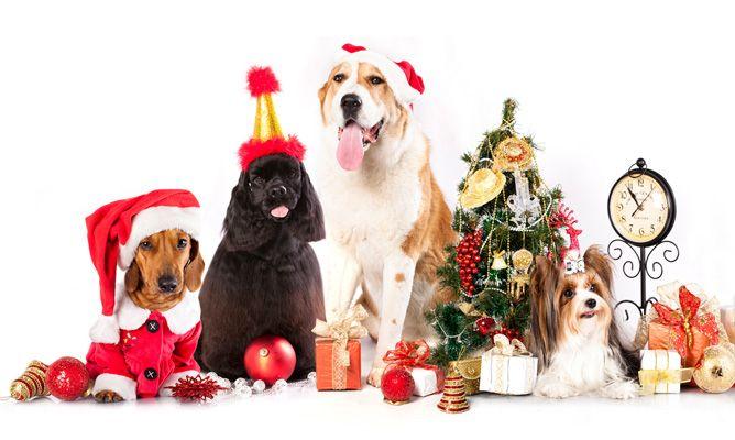 evitar-estres-mascotas-navidad-668x400x80xX