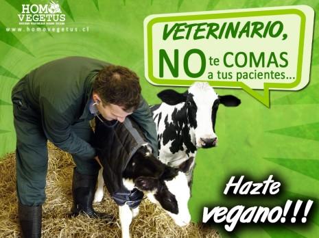 hv-wall-veterinario-vegano