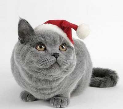 perroGato-navideño1