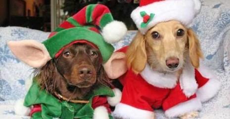 perros-disfrazados-papa-noel-elfo