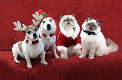 perros-gatos-disfrazados-navidad