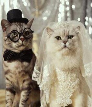 gato-casado