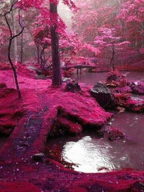 paisajesLos famosos ''Puentes de Musgo Rosa'', Irlanda.