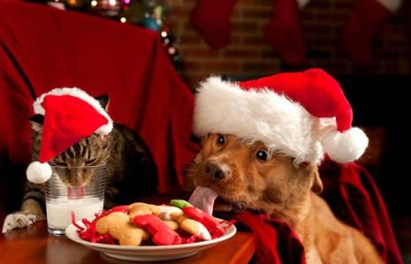 perros-feliz-navidad