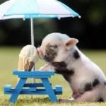 Divertidas imágenes de animales para WhatsApp: Descargar gratis