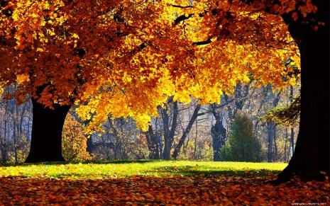 autumn-wallpaper-1680x1050-002