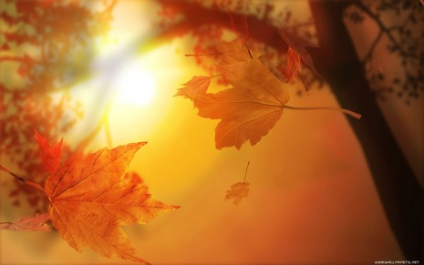 autumn-wallpaper-1680x1050-004