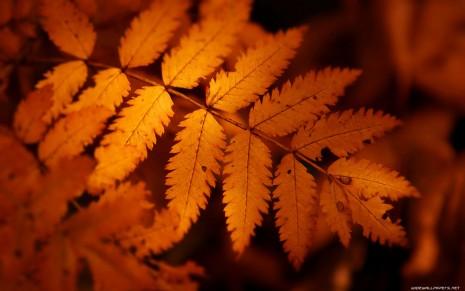 autumn-wallpaper-1680x1050-005