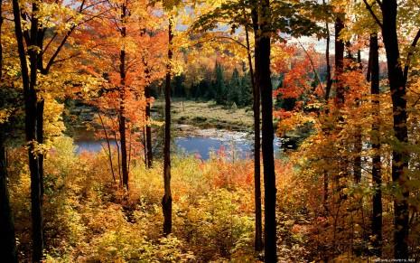 autumn-wallpaper-1680x1050-009