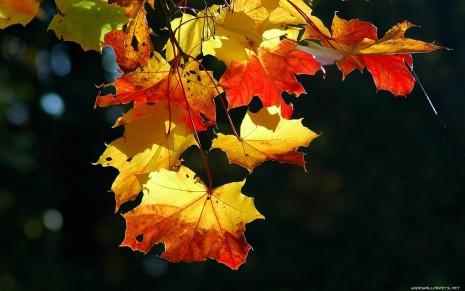 autumn-wallpaper-1680x1050-010