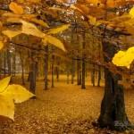 Espectaculares paisajes de otoño para el fondo de pantalla