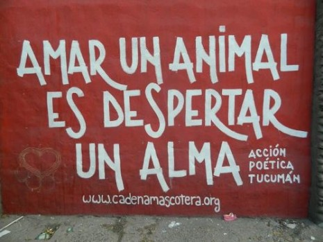 amar-un-animal