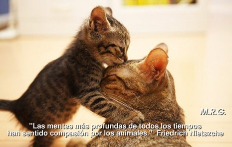 animal.jpg6.jpg8