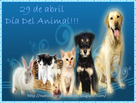 dia-del-animal_001