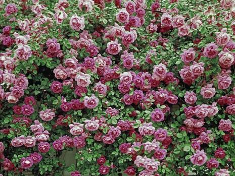 Flores9F