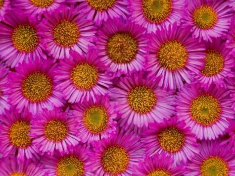 Flores_800