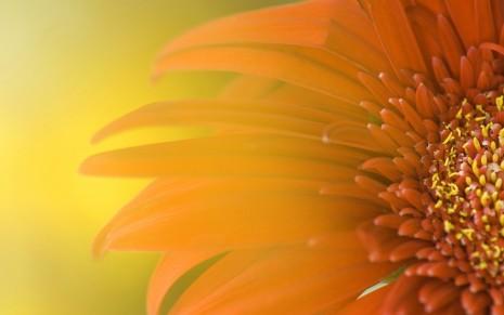 Floresondos-Flores-HD-17