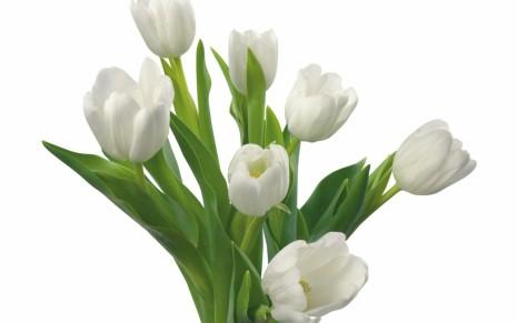 flores-blancas-para-boda-8917