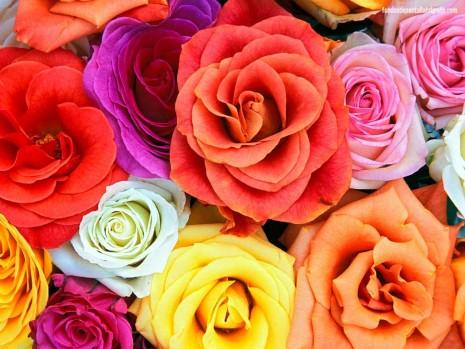 floresondos-de-escritorio-flores-y-plantas-79-18298