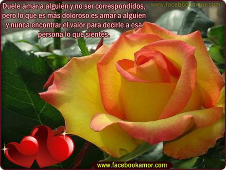 rosaimagenes-de-flores-hermosas-de-amor-3