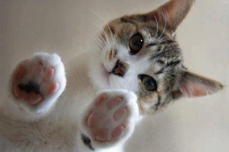 gato20-datos-curiosos-que-no-sabías-de-los-gatos