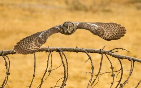 avesBuho-o-lechuza-volando_Imagenes-de-Aves-Exoticas