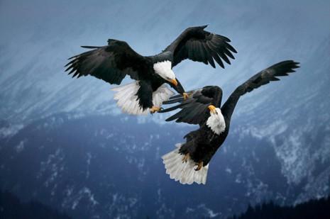 avesimagenes-de-aves