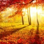 54 imágenes de otoño para WhatsApp ¡Bienvenido otoño! Imágenes de otoño para WhatsApp