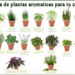 Plantas aromáticas y medicinales que podés cultivar en tu casa – Propiedades y beneficios