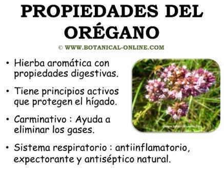 Plantas arom ticas y medicinales que pod s cultivar en tu for Planta decorativa con propiedades medicinales
