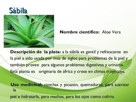 aromaticassabilaaloevera