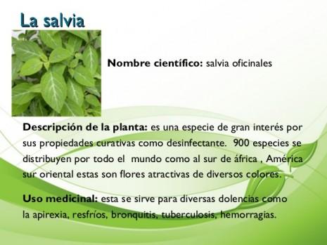 aromaticassalvia