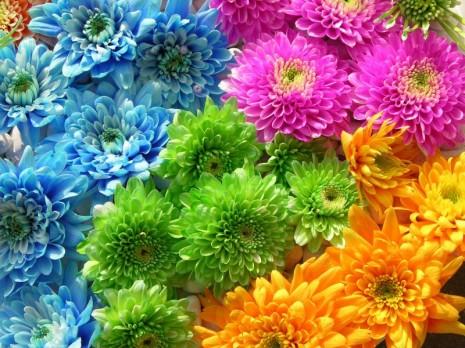 Flores de Colores-166734_800