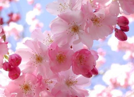Primavera_009