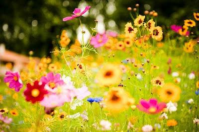 feliz-inicio-de-primavera-happy-spring
