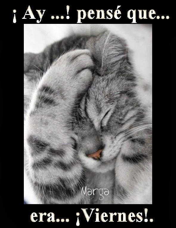 gato_