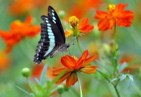 mariposa sobre flor10592781_580763495366713_2992391319879874093_n