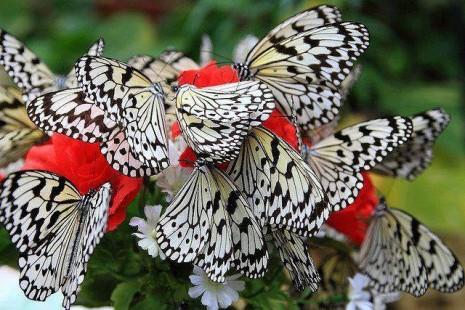 mariposas1497792_580620922047637_7556990500356599449_n