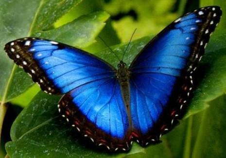mariposas73684_foto_60083