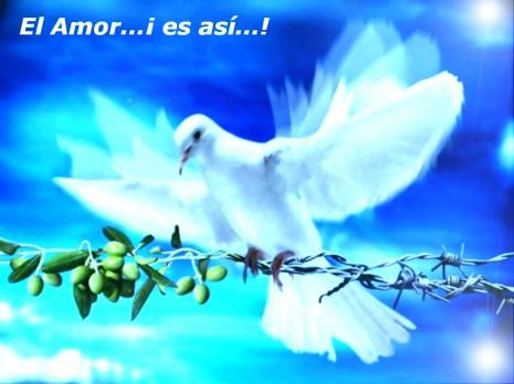 paz13