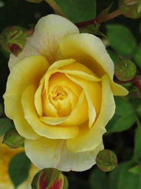 Flores Y Mensajes Para La Primavera Imagenes Para Whatsapp