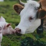 Afiches y reflexiones sobre veganismo para descargar el 1º de noviembre