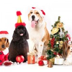 Mis mascotas de Navidad: Imágenes de perros y gatos Navideños
