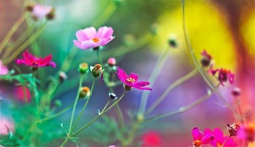 floresookj