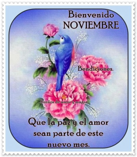 noviembrecon frase