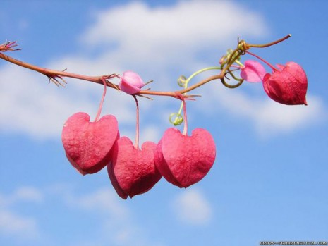 valentines-day-hearts-on-tree-wallpapers-1600x1200