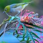 Lo bello de la naturaleza en imágenes para WhatsApp del 3 de marzo Día Mundial de la Naturaleza