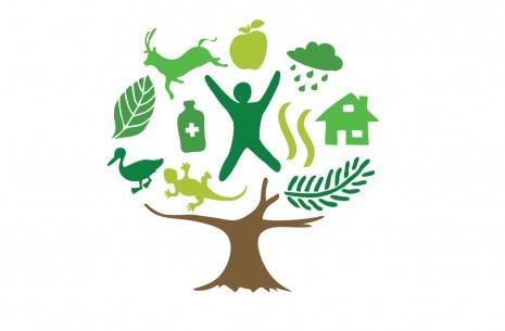 InternationalYearofForests2011
