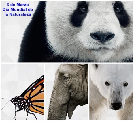 dia-mundial-de-la-naturaleza