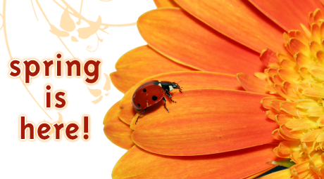 Spring-is-here-ladybug-on-flower